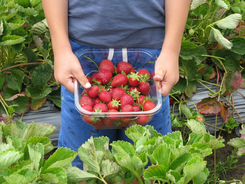 Erdbeeren zum Wein selber machen